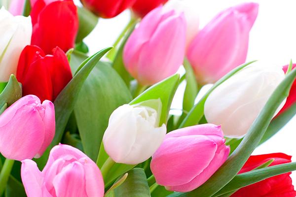 Поздравление с Днем 8 марта