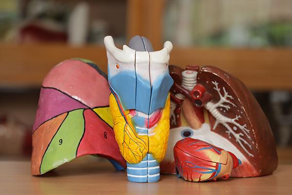 Беречь щитовидную железу