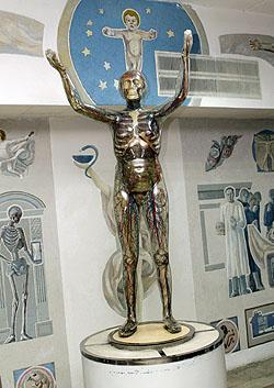 Анатомический музей (1992 г.).