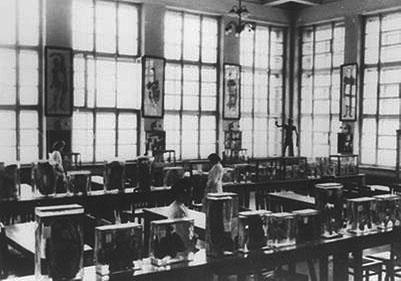 Анатомический музей кафедры (1962)